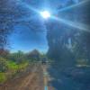 River Oak Gardens