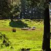 Aristaeus Farms Respite Zone