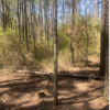 Private Open Wooded Land