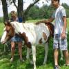 Horses on the Hill & Walk W Horses