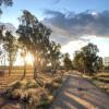 Bundarra Berkshires Farm Camp