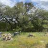 Camp twisted oaks