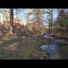 Creekside Woods