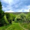 Wineberry Grove
