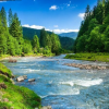 Discover Tahoe Forest Rivers Lakes