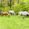 Horse Heaven in Tennessee