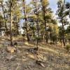 Amazing Carter Lake Camp Site