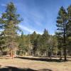 Rustic Creek Ranch #2 Steller Jay