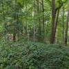 Hidden Riverside Hammock Spot