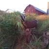 PB Farm Rustic camping
