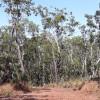 Samson Creek - Rainforest