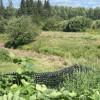 Kavanagh Farm camping