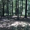 Pine Swamps Camping
