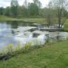 Primitive Pond Side Camping