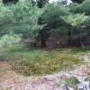 Meadow Bluff
