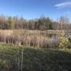 Scenic Cedar Pond