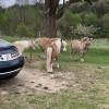 Miniature Horse & Donkey Oasis