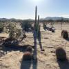 Desert breezes