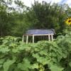 Camp Passiflora