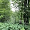 Peaceful Forest Hugs