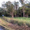 Bay Pine Farms