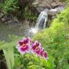 Heavenly Hamakua Waterfall cabins