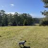 Wootton Arabian Stud Top Ridge#3