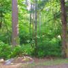 Forest Campsite Near Mt. Rainier