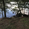 Lakeside Birch grove