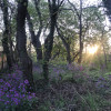 DC Hiker/Biker Magical Nook Forest
