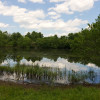 Open and Treed Acres w Fishing Pond