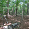 Wooded trails Site 3