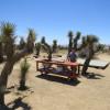 Joshua Tree Rancho