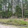 Wooded marsh