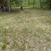 Shaded Site in tiny meadow