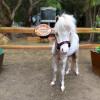 The Pony Experience