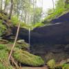 Forest Creek Campground