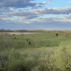 Coal Creek Land and Cattle