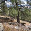 Grubstake Mountain Get-away
