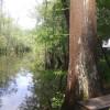 Willetts Landing Town Creek