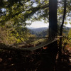 Forever Views Forest Perch