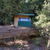 Cabin Under Redwood