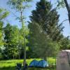 Wild Apple Grove Site