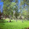 Tanaina Folk Farm Lawn