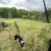 Ted's Farm