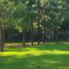 Pine Forest with grass clearing