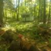 mature hardwood forest river camp