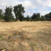 Farm land with oaks