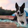 Wisconsin River Sandbar Camping