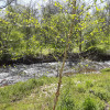 Secluded Creekside Camper